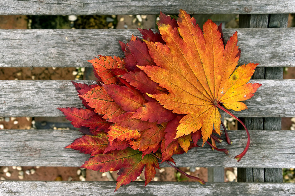 autumn_wallpaper_background_25959